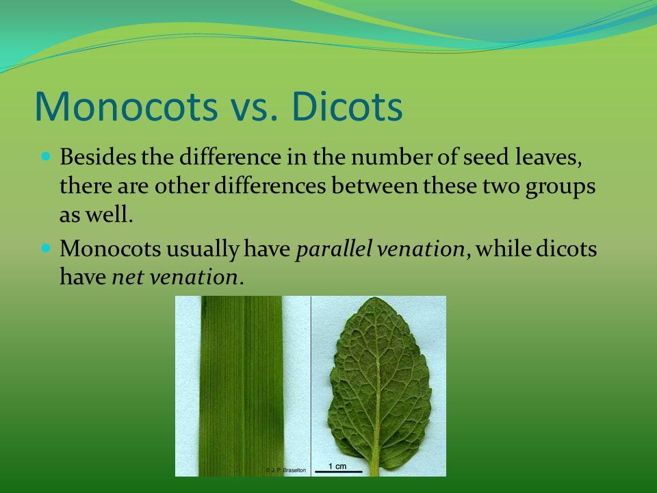 monocots dicots