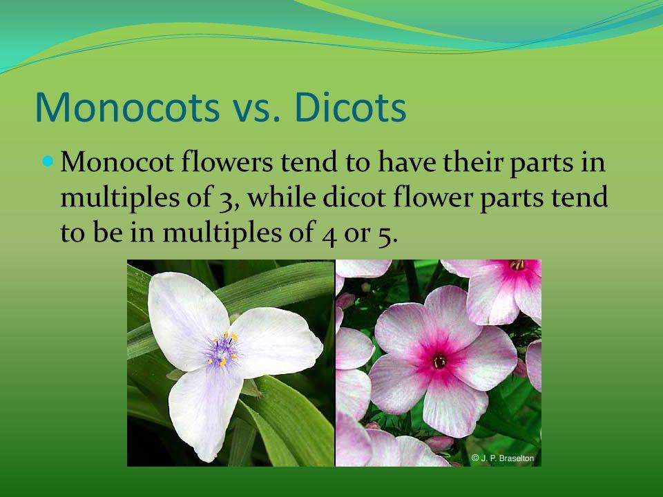 Monocots vs.