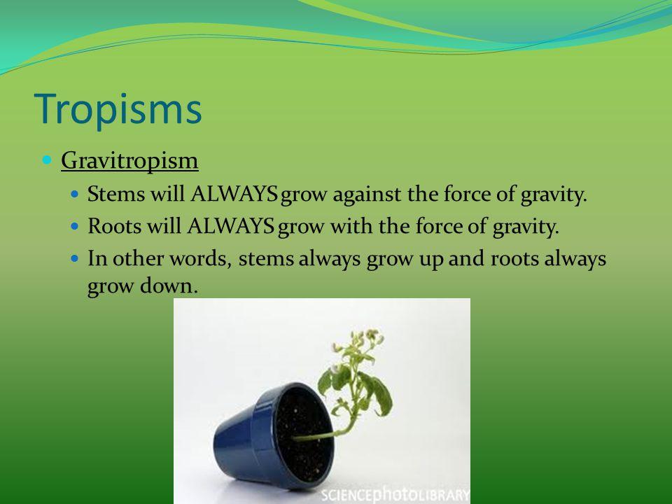 Tropisms Gravitropism