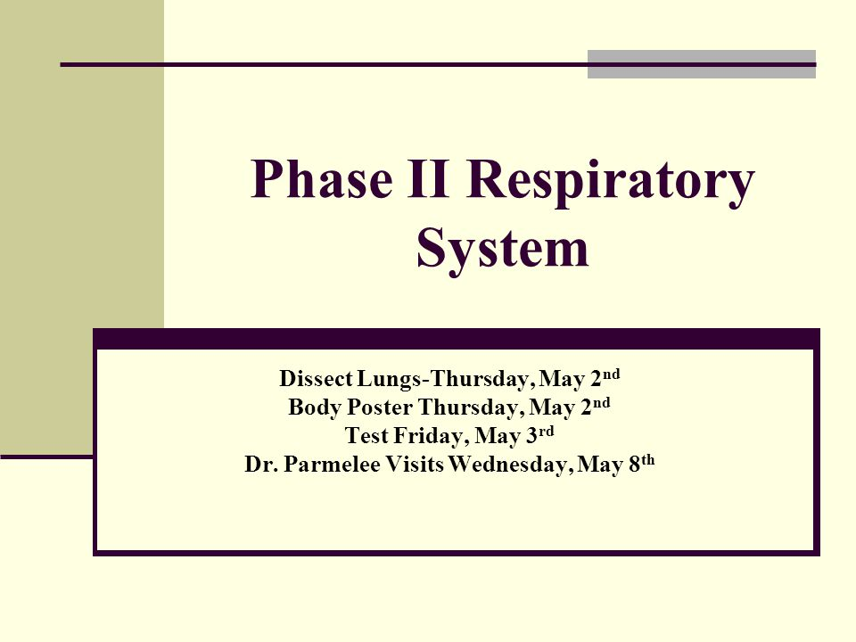 Phase II Respiratory System
