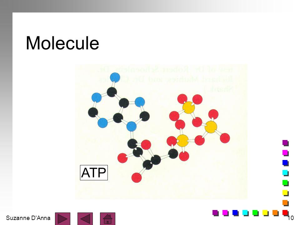 Molecule ATP