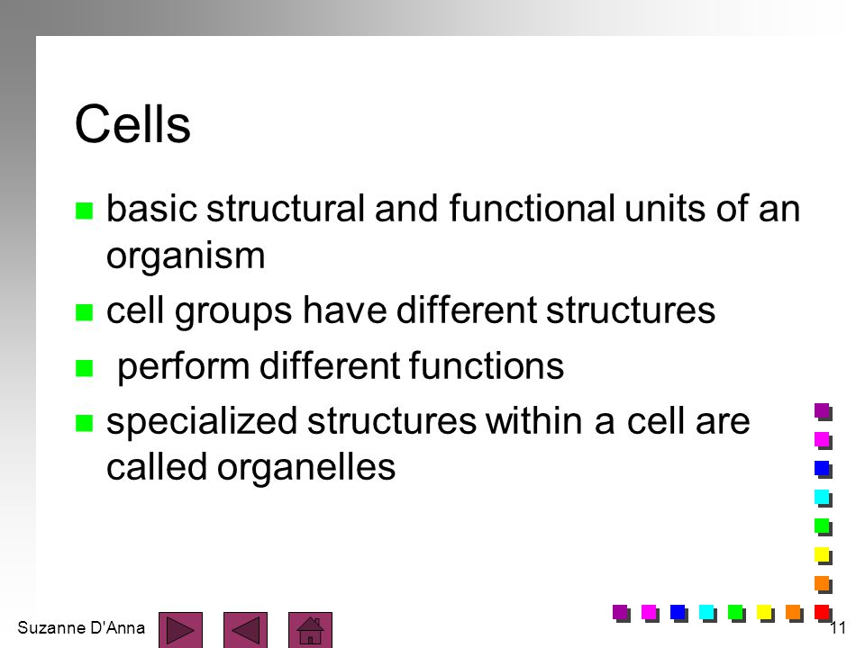 Cells basic structural and functional units of an organism