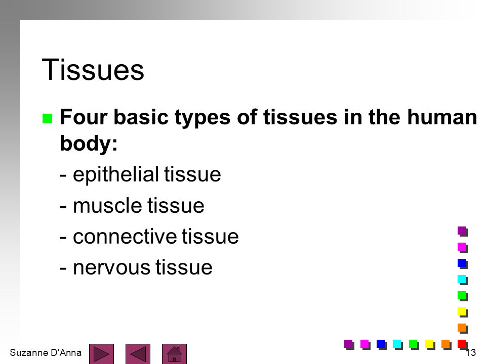 Tissues Four basic types of tissues in the human body:
