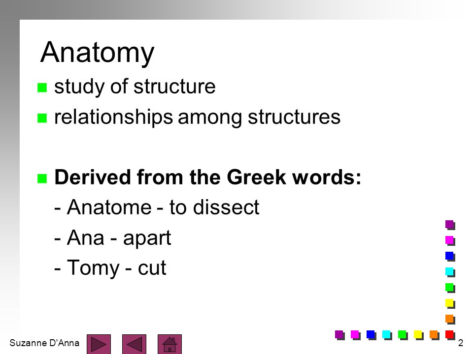 Anatomy study of structure relationships among structures