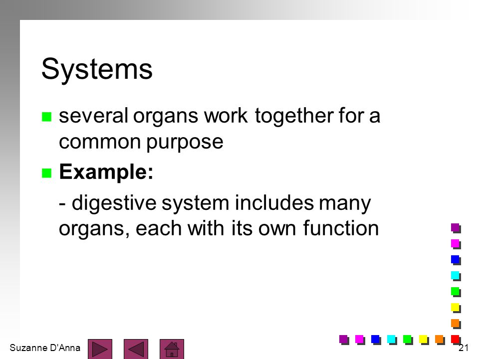 Systems several organs work together for a common purpose Example: