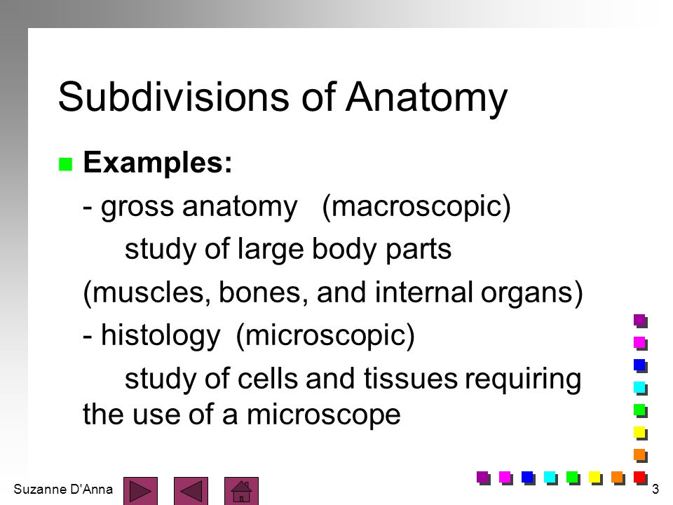 Subdivisions of Anatomy