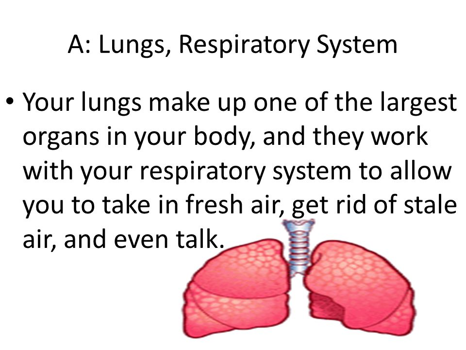 A: Lungs, Respiratory System