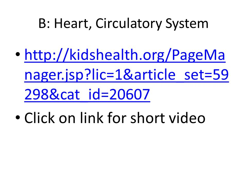 B: Heart, Circulatory System