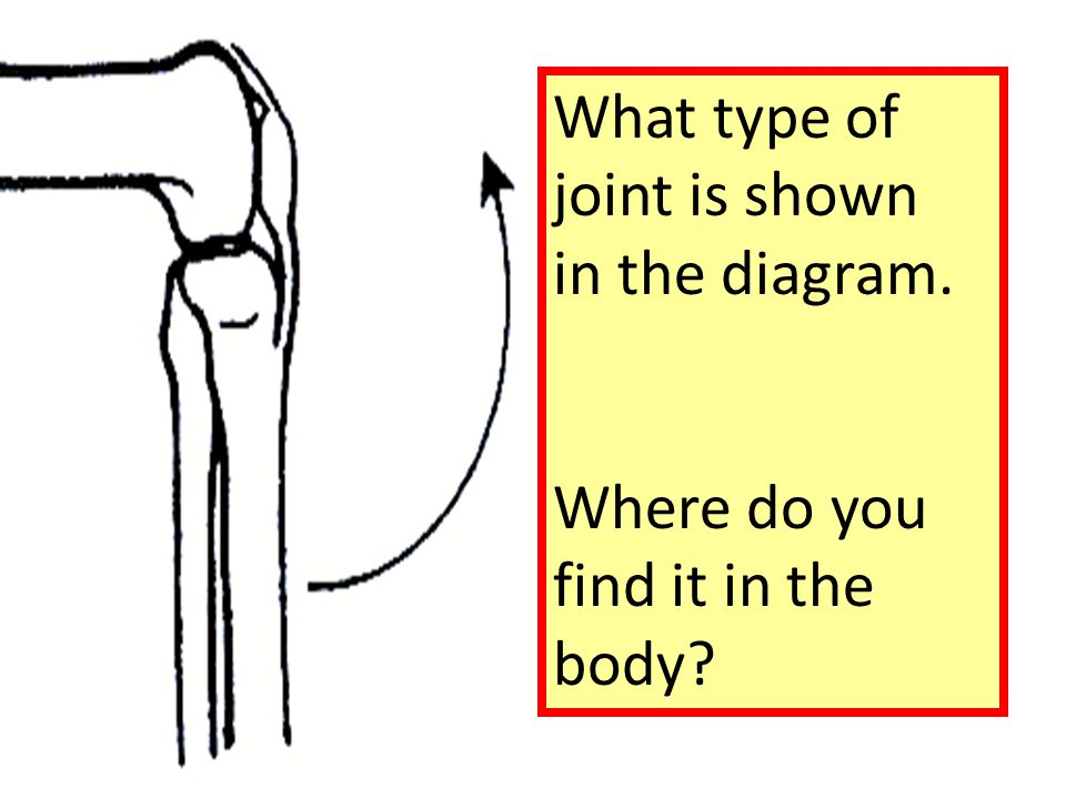 What type of joint is shown in the diagram. Where do you find it in the body