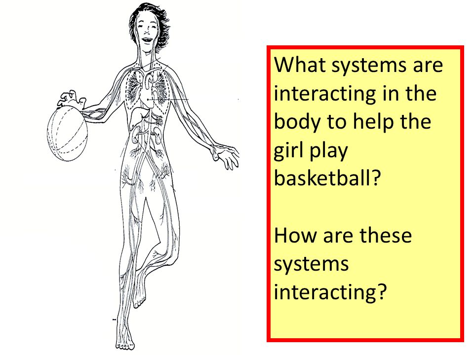 What systems are interacting in the