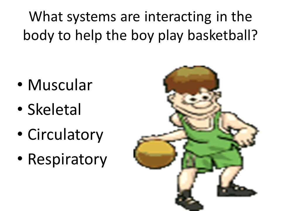Muscular Skeletal Circulatory Respiratory
