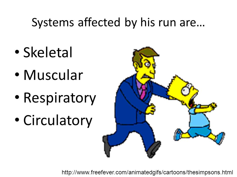 Systems affected by his run are…