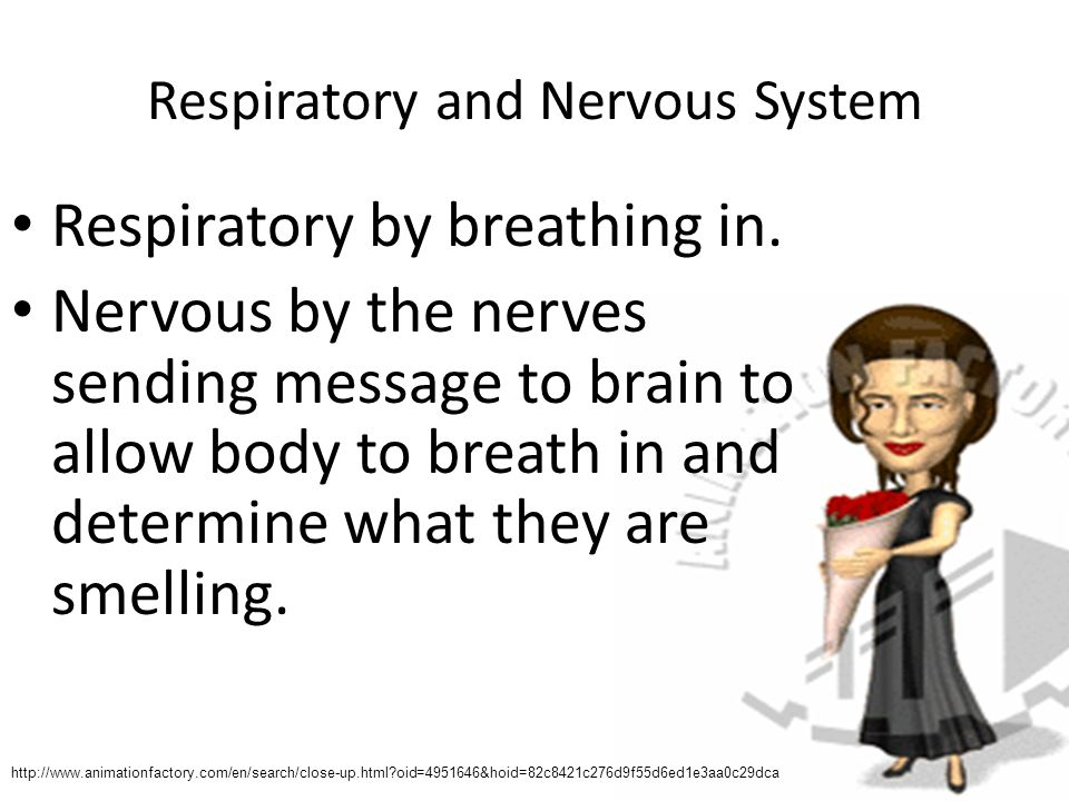 Respiratory and Nervous System