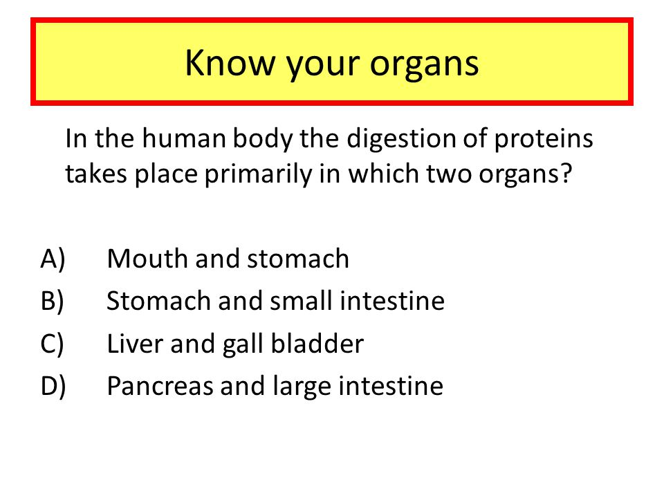 Know your organs In the human body the digestion of proteins takes place primarily in which two organs
