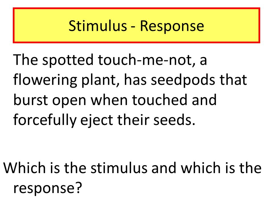 Which is the stimulus and which is the response