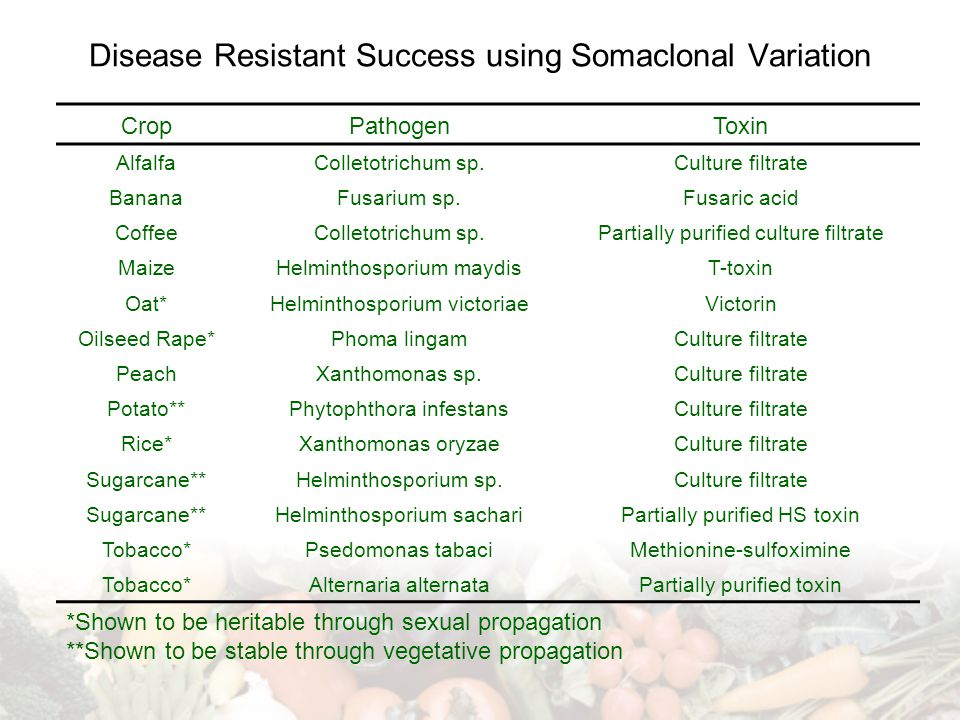 Disease Resistant Success using Somaclonal Variation