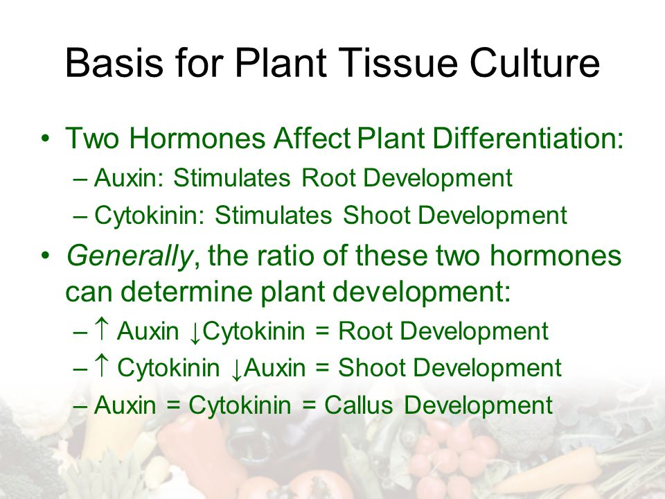 Basis for Plant Tissue Culture