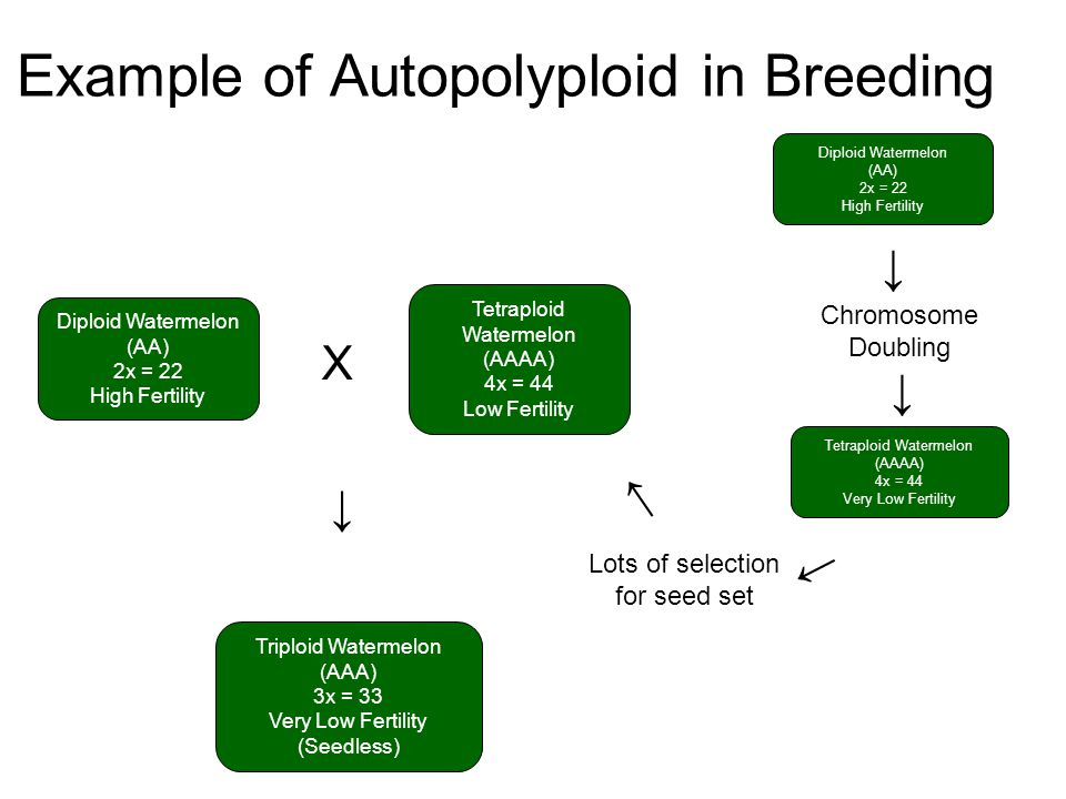 Example of Autopolyploid in Breeding