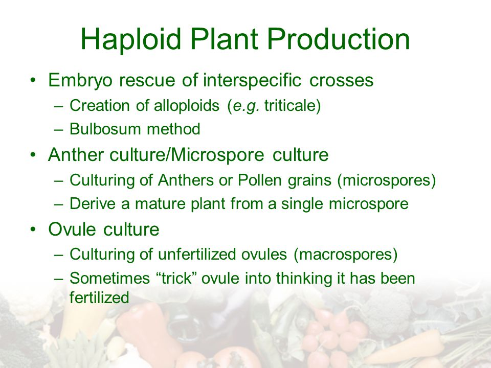 Haploid Plant Production