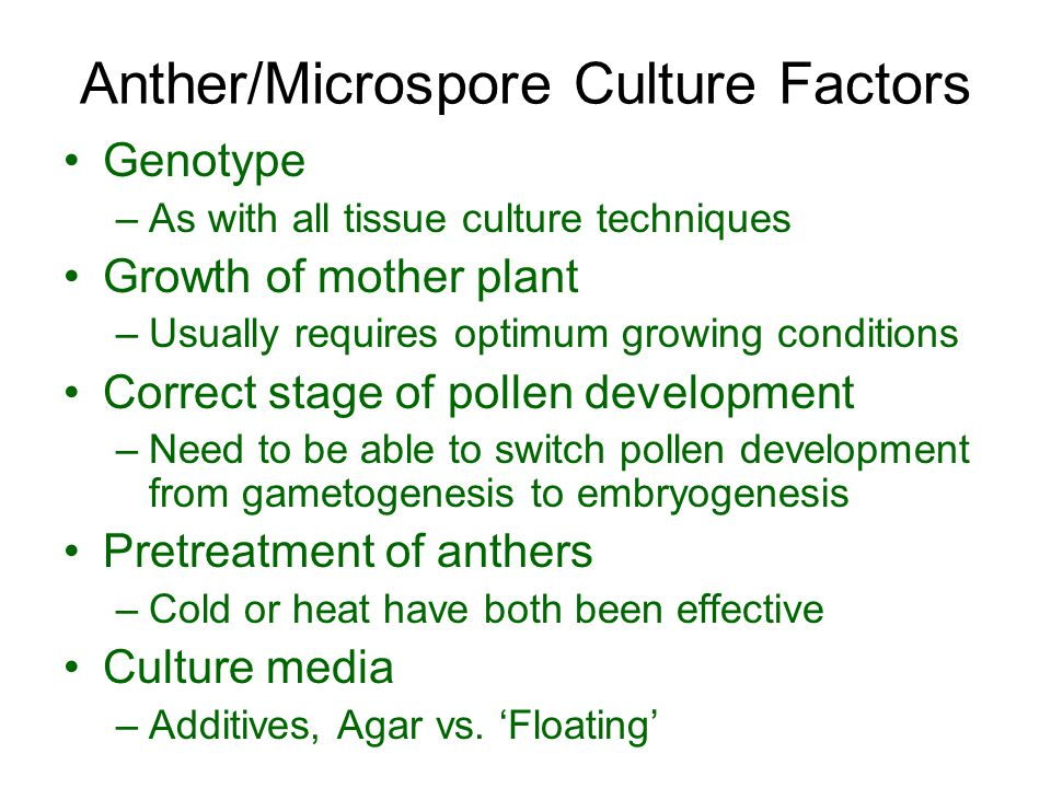 Anther/Microspore Culture Factors