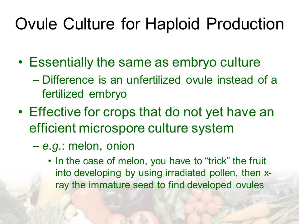Ovule Culture for Haploid Production