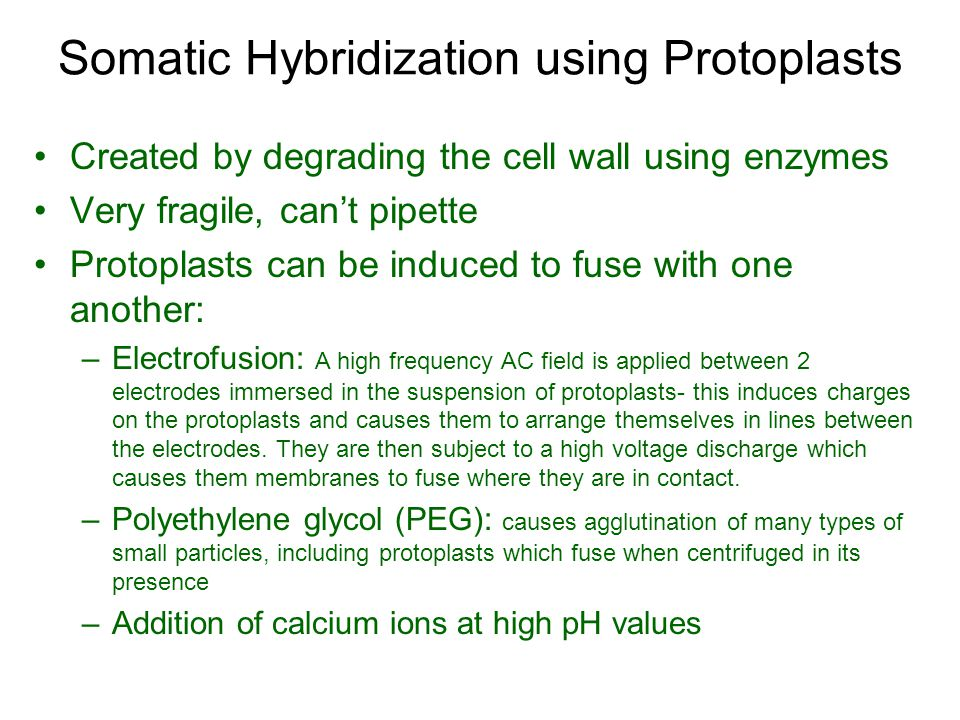 Somatic Hybridization using Protoplasts