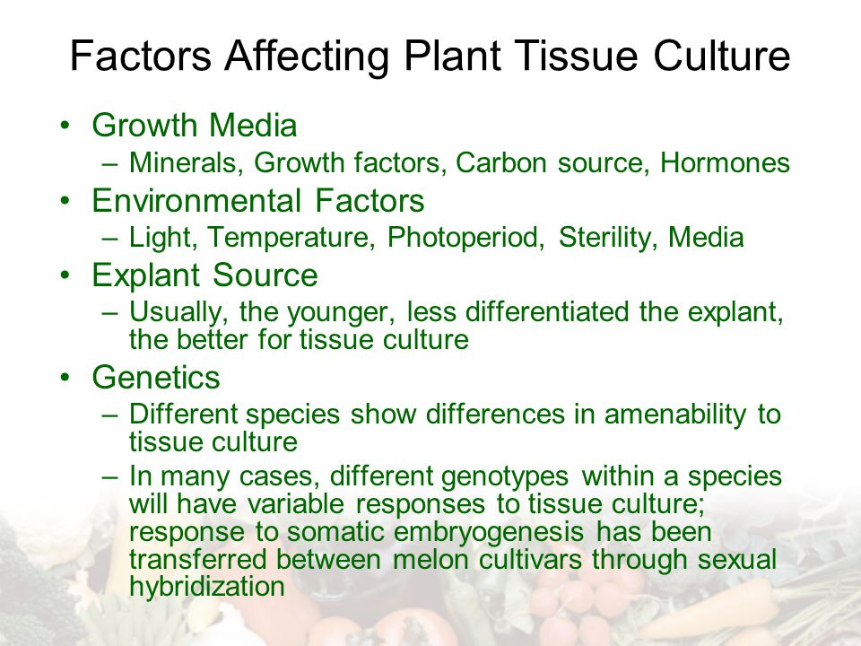 Factors Affecting Plant Tissue Culture