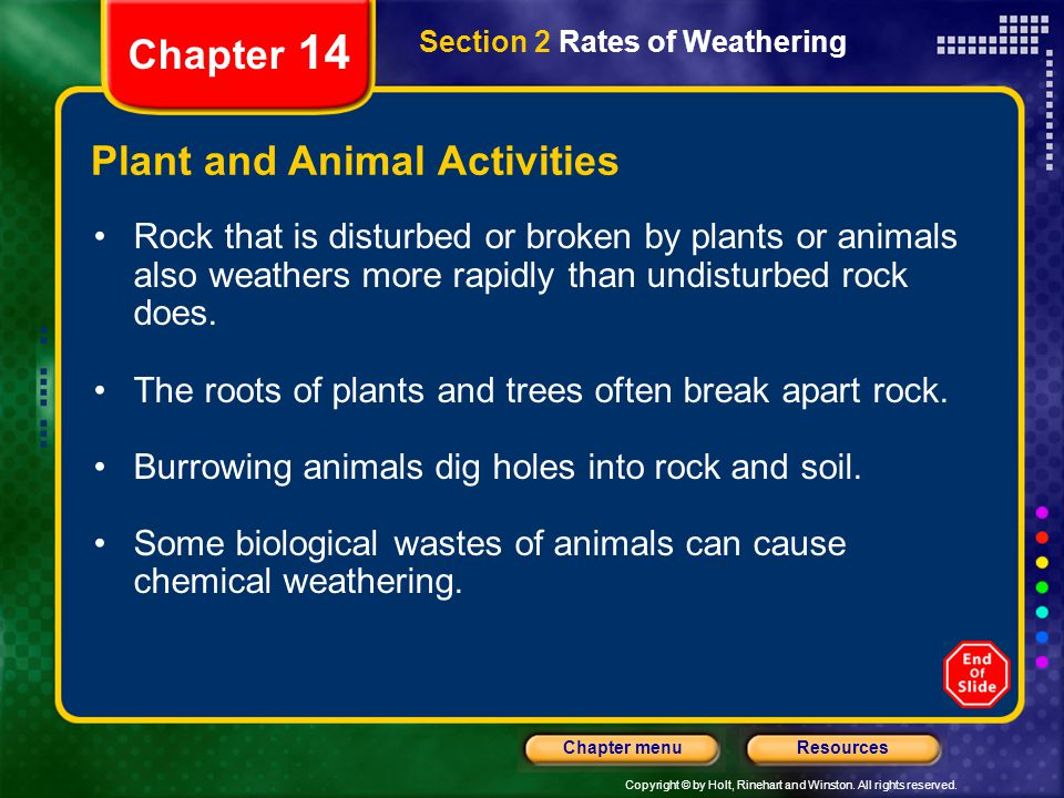 Plant and Animal Activities