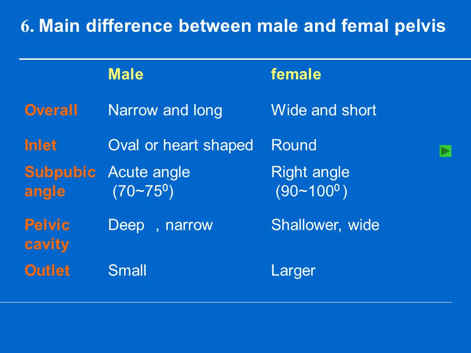 6. Main difference between male and femal pelvis