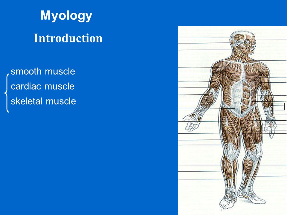 Myology Introduction smooth muscle cardiac muscle skeletal muscle