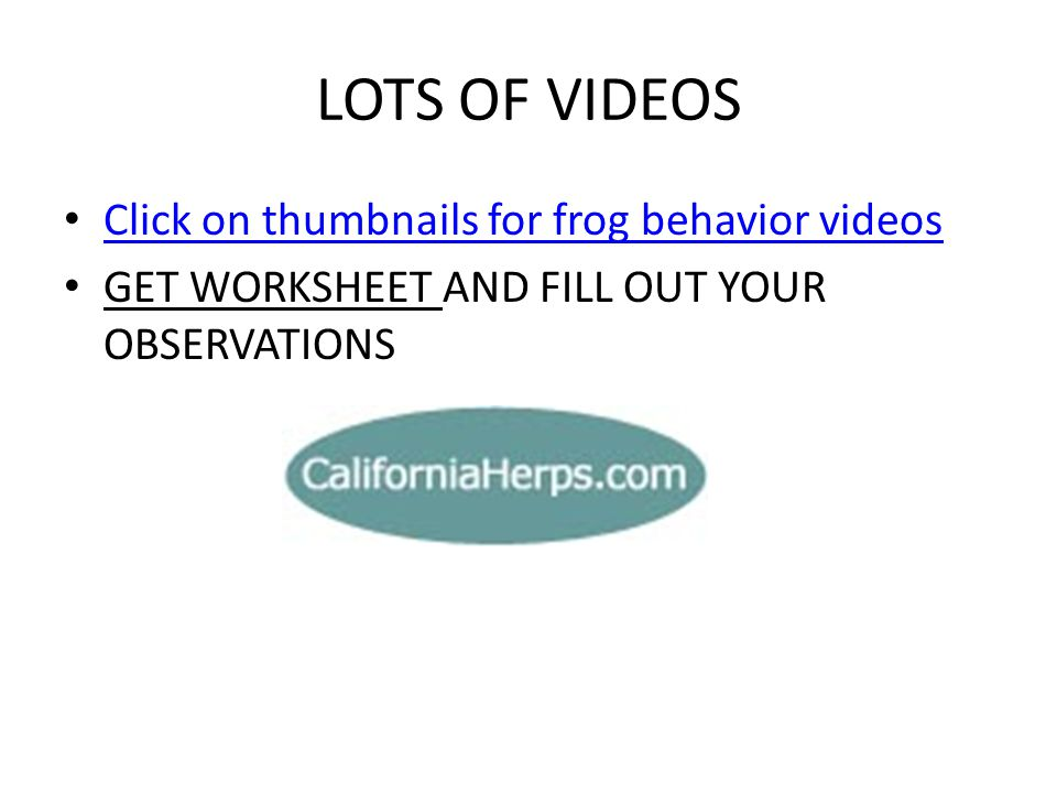 LOTS OF VIDEOS Click on thumbnails for frog behavior videos