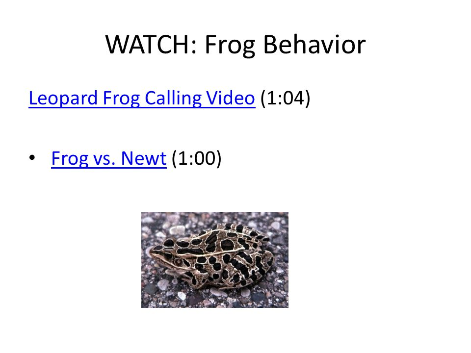WATCH: Frog Behavior Leopard Frog Calling Video (1:04)