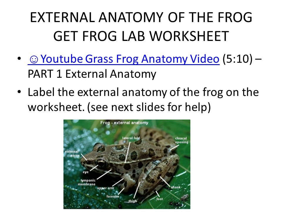 Outstanding External Anatomy Of Frog Picture Collection - Human ...