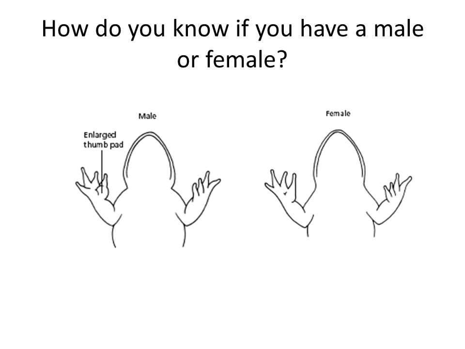 How do you know if you have a male or female