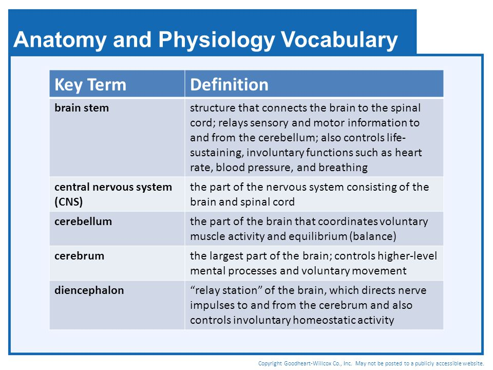 Anatomy and Physiology Vocabulary