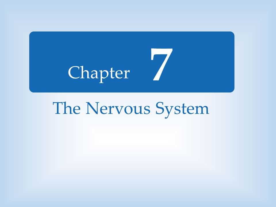 7 The Nervous System