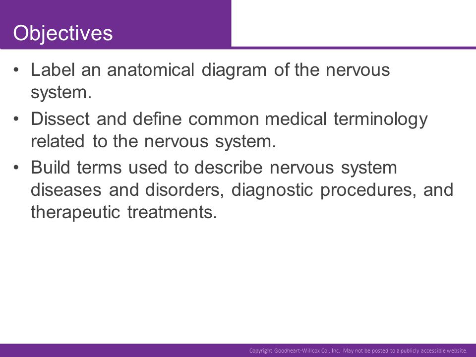Objectives Label an anatomical diagram of the nervous system.
