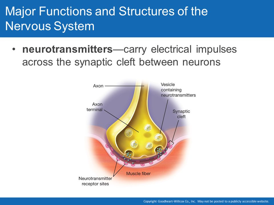 Major Functions and Structures of the Nervous System