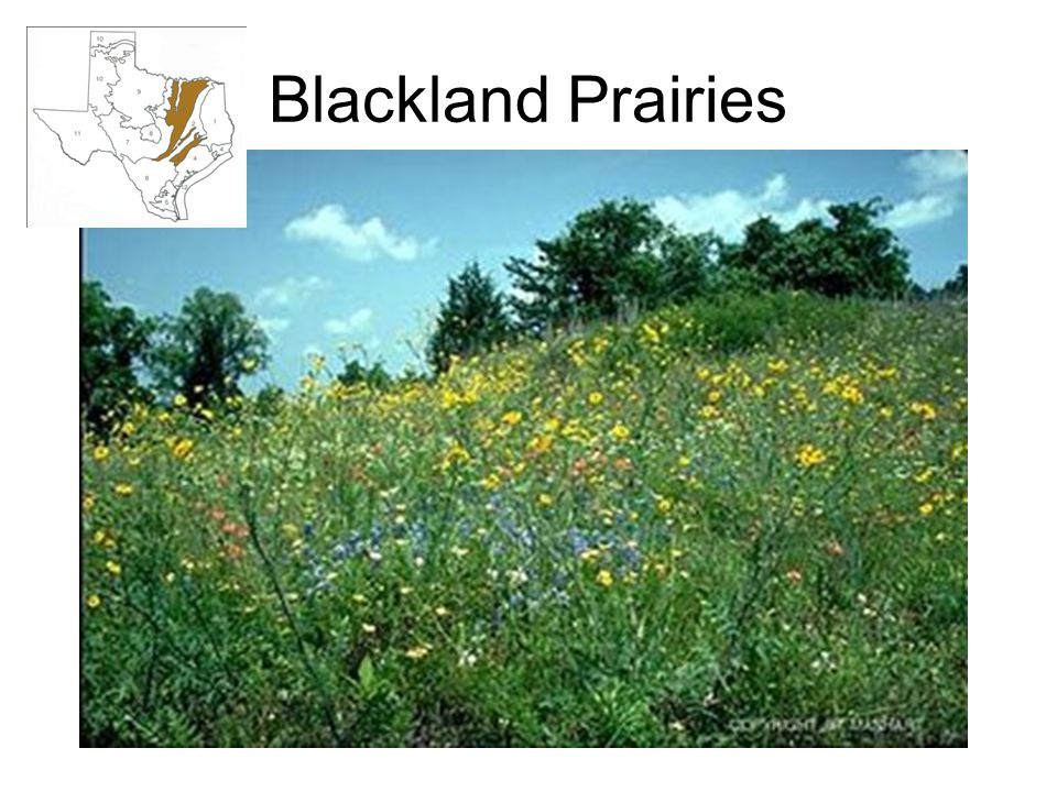 Blackland Prairies
