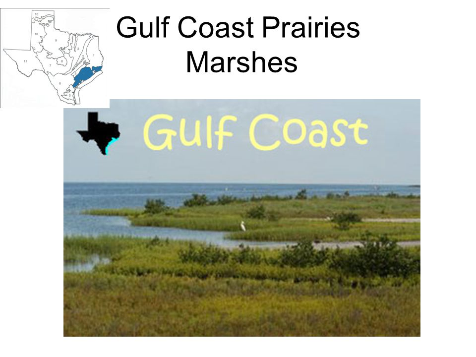 Gulf Coast Prairies Marshes