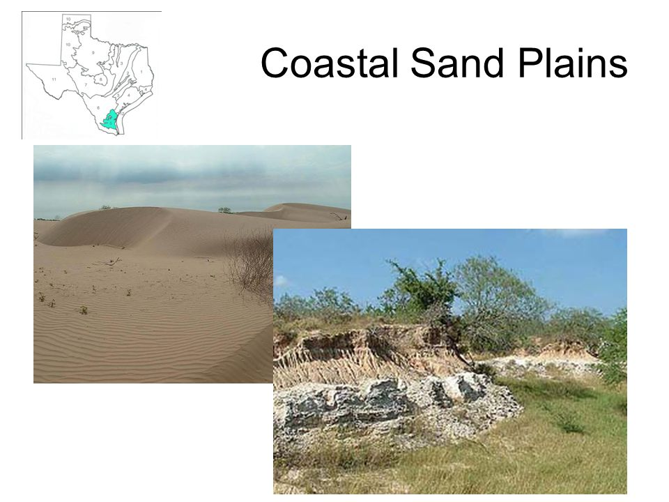 Coastal Sand Plains