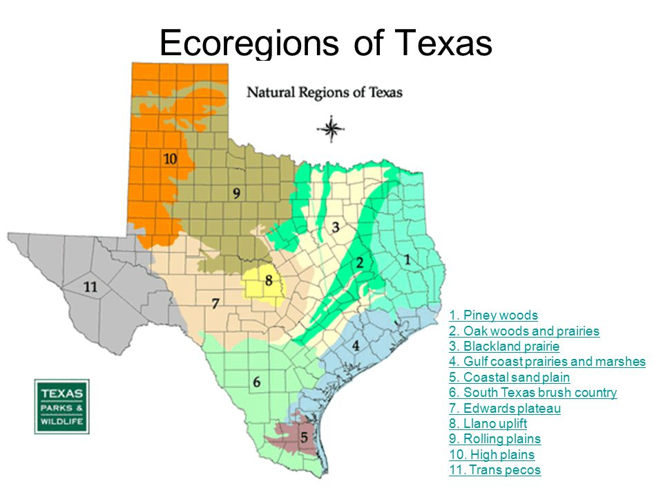 Ecoregions of Texas 1. Piney woods 2. Oak woods and prairies