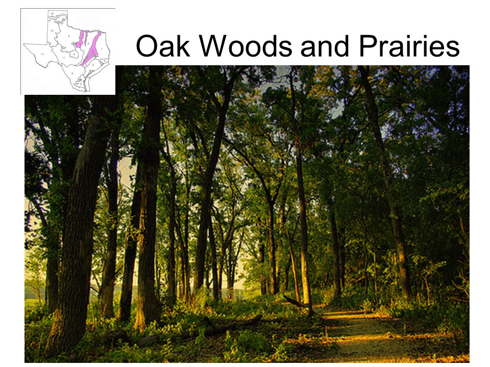 Oak Woods and Prairies