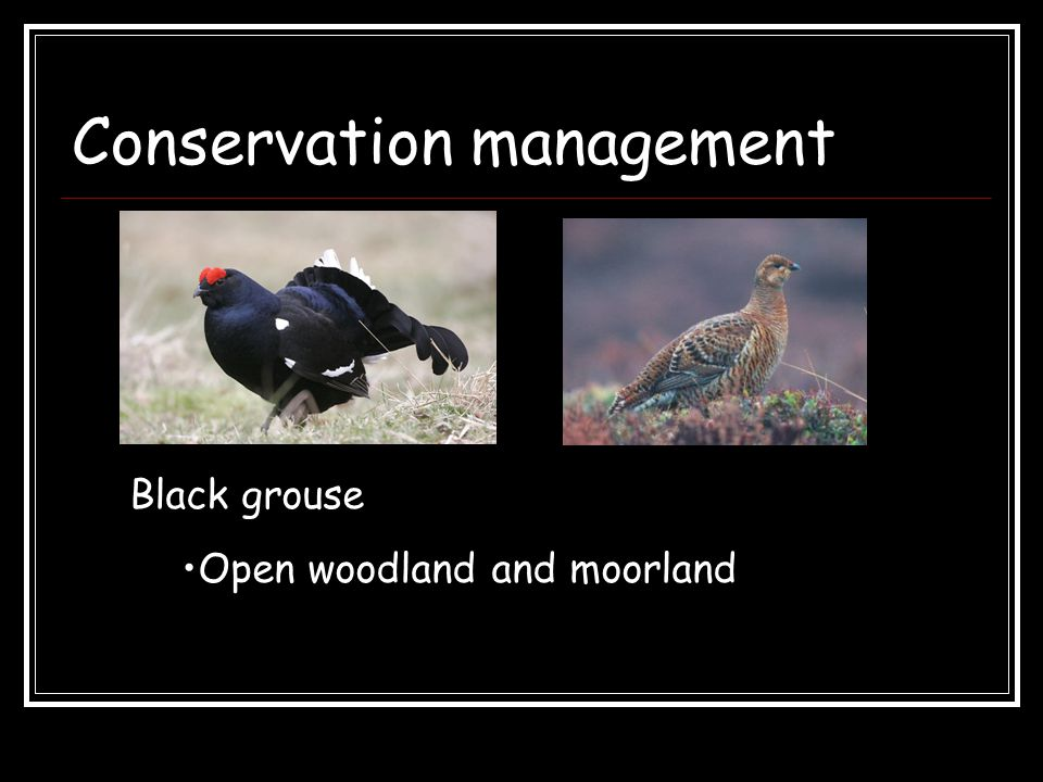 Conservation management