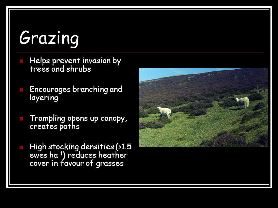 Grazing Helps prevent invasion by trees and shrubs