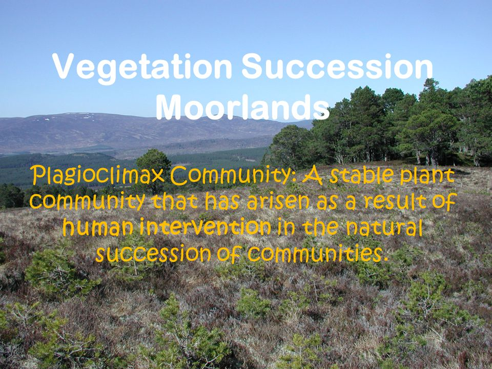 Vegetation Succession Moorlands Plagioclimax Community: A stable plant community that has arisen as a result of human intervention in the natural succession of communities.