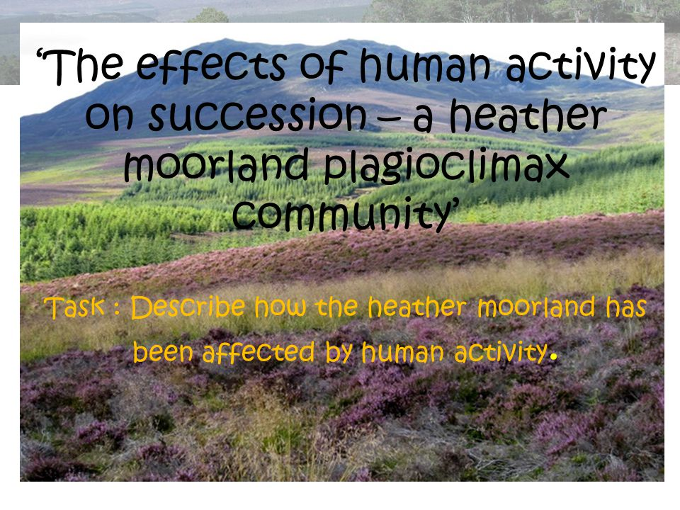 'The effects of human activity on succession – a heather moorland plagioclimax community' Task : Describe how the heather moorland has been affected by human activity.