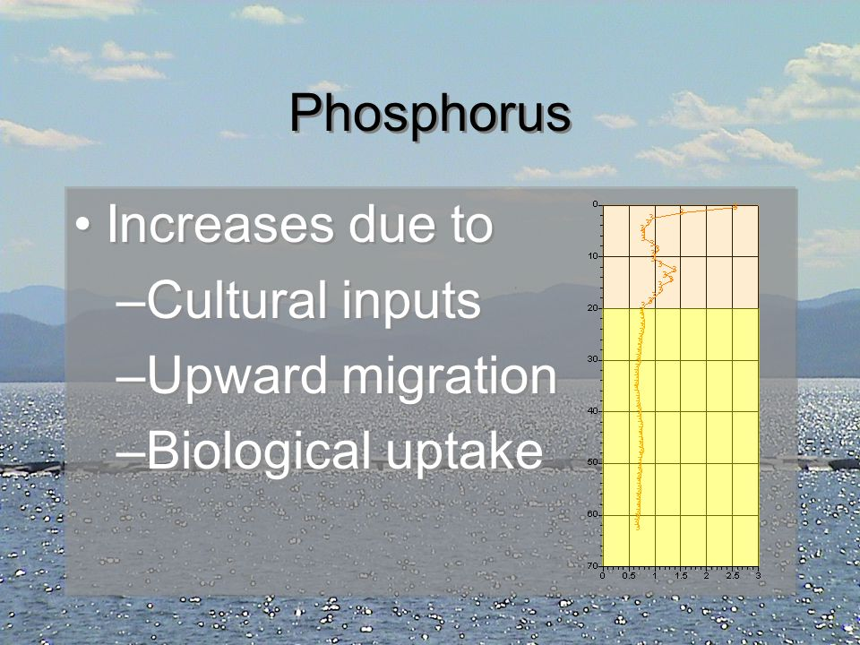 Phosphorus Increases due to Cultural inputs Upward migration Biological uptake