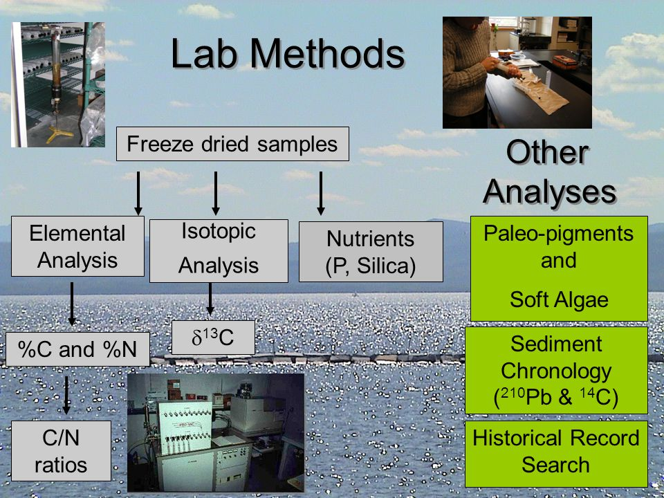 Lab Methods Other Analyses Freeze dried samples Elemental Analysis
