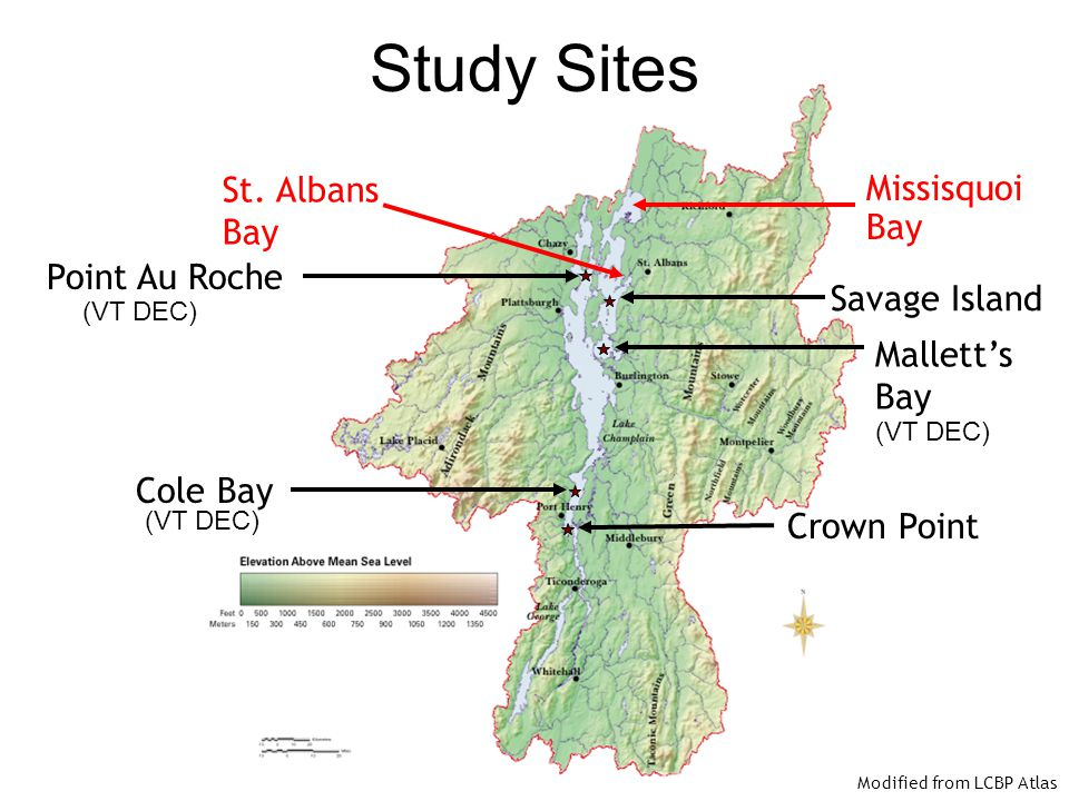 Study Sites St. Albans Missisquoi Bay Bay Point Au Roche Savage Island